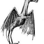 Pine Barrens NJ Devil