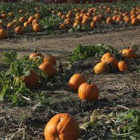 Happy Day Farm 2015 Toddler Halloween Events