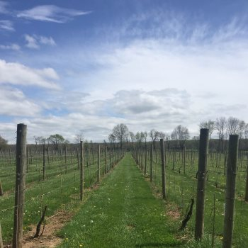 Unionville Vineyards Vineyard In Northern New Jersey